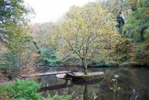 Le bois de Kéroual - Guilers.1.1